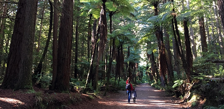 Visiting the Giant Redwoods forests in Rotorua New Zealand